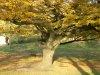 davidcook: (autumn1)