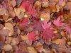 davidcook: (autumn3)