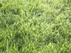 davidcook: (grass)