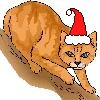 davidcook: (christmascat)