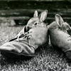 sotto_voce: two bunnies sitting in a pair of shoes ([misc] bunny shoes)