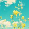 triplesalto: (flowers)