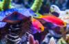 smileyseeds: (Rainbow Fish) (Default)
