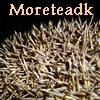 moreteadk: Close-up of hedgehog bristles, with my username written above (Default)