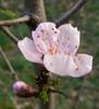 elnigma111: (peach)