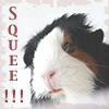 quatorze: guinea pig icon made by Aigha (Squeee!)