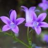 alphastarr: (violets, lesbians)