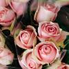 karmageddon: (Roses)