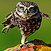 movingon: (owl)