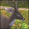 crown_of_antlers: A deer from LOTRO (White Buck)