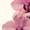 cotume27: (Flowers)