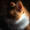 cathugger: An orange-and-white cat facing to the left. The front of this face is fading into shadows. (Default)
