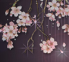 ext_3245: (Sakura)