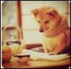 sunnymodffa: Shiba Inu reading a book, drinking tea (Shiba Inu Tea)
