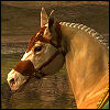 crown_of_antlers: (Harmony - Palomino Horse)