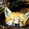 annwfyn: (mood - smiling ffox)