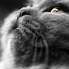kittyrefuge: (Default)