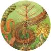 duchess_k: (Haeckel seaplants)