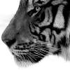 black_black_heart: (tiger - yes?)