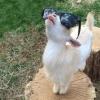 goatling: (pic#10782419)