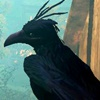 funnybird: (33)