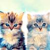darjeeling: ([ STOCK ] resistance of cute is futile)
