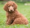 feminine_menace: (Stella (puppy))