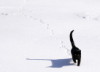 cayleighstickler: Black cat walking through the snow leaving a trail of paw prints (kitten)