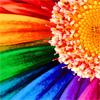 elrhiarhodan: (Flower - Rainbow Flower)