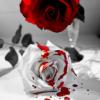 spacepirate: (Bleeding Rose)