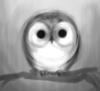 annielee: (owl)
