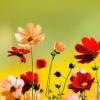 rainpuddle13: (flowers - red flowers)