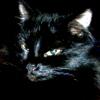 zelena_wilga: (коты)