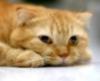 superhimik: кот (кот)