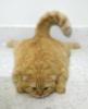 superhimik: (кот в ауте)