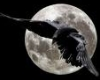 anariel_r: (Ворон и луна)