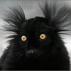 snarka: (black)