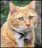 0lga_marple: (котярка рыжая)