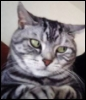 0lga_marple: (котярка серая)