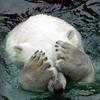 carmody56: (медвепуты)