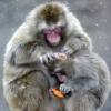 aazzz: (monkey)