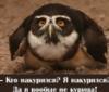 dolgo_vo59: (юпик)