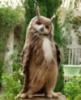 dolgo_vo59: (птиц)
