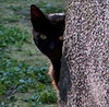hiddenbehind: (кошка Шрёдингера)