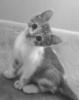 graypcat: (Me) (Default)