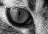 graypcat: (Око)