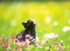 graypcat: (Мечтаю)
