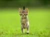 graypcat: (Кто здесь)