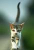 graypcat: (Иду)