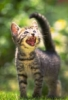 graypcat: (Смех)